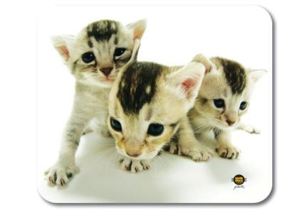 Allsop podložka pod myš - HANA DEKA kočky