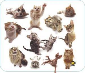 Allsop podložka pod myš - Kočky