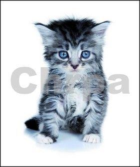 Památníček – koťátko cena od 59 Kč