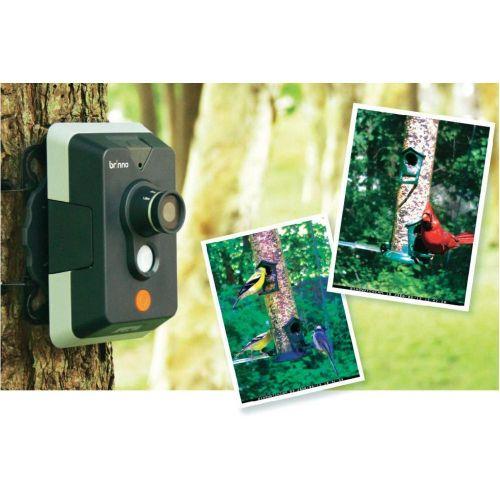 brinno Kamera pro pozorování ptáků