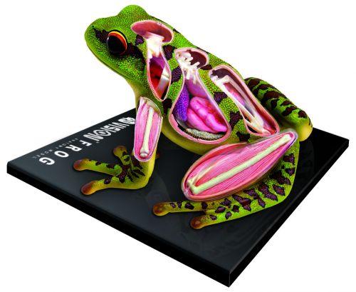 Mac Toys Anatomický model Žába