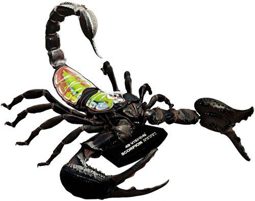 Mac Toys Anatomický model Škorpión