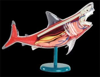 PRIME Shark Model