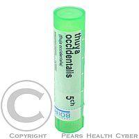 THUYA OCCIDENTALIS CH5 granule 4 g cena od 69 Kč