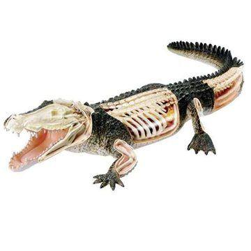 Revell X-ray 02095 - Krokodýl