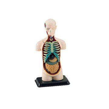 Revell X-ray 02100 - Model lidského těla cena od 0 Kč