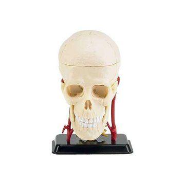 Revell X-ray 02102 - Model lidské lebky