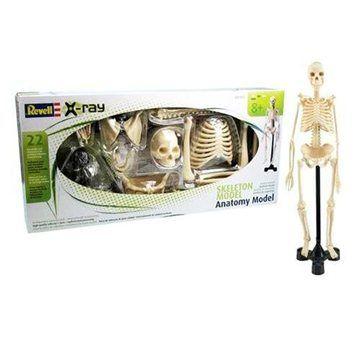 Revell X-ray 02103 - Model lidského kostry cena od 0 Kč