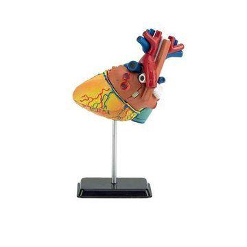 Revell X-ray Model lidského srdce 02101 cena od 548 Kč