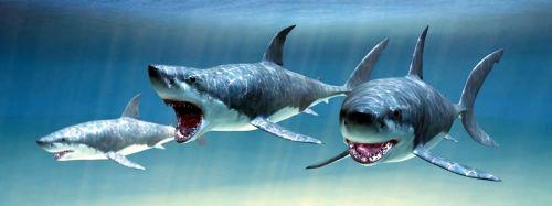 ABC Develop Záložka - Úžaska - Žraloci cena od 73 Kč