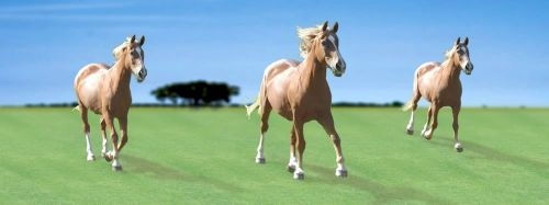 ABC Develop Záložka - Úžaska - Koně cena od 73 Kč