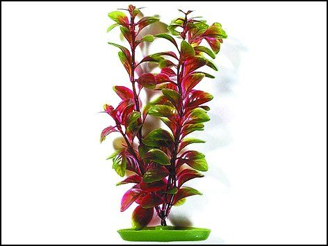 Hagen Rostlina Red Ludwigia 38 cm