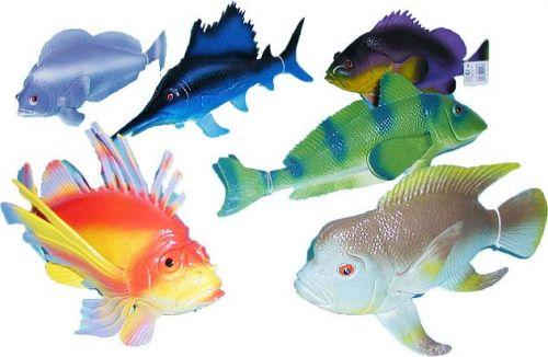 Rappa ryba tropická 24-36 cm cena od 106 Kč