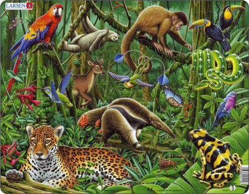 LARSEN Deštný prales Jižní Ameriky