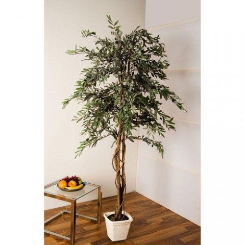 OEM Olivovník 180 cm