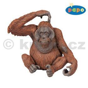 Orangutan cena od 136 Kč