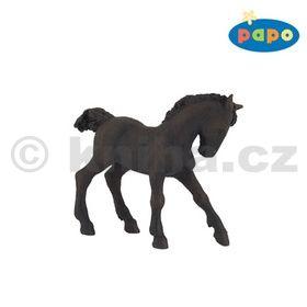 Fríský kůň mládě cena od 113 Kč