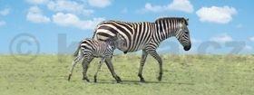 Záložka Úžaska Zebra s mládětem cena od 73 Kč