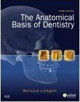 Elsevier Ltd Anatomical Basis of Dentistry - Liebgott, B. cena od 2314 Kč