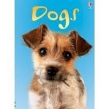 XXL obrazek Usborne Publishing USBORNE BEGINNERS: DOGS