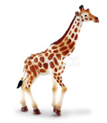 Collecta Žirafa africká cena od 0 Kč