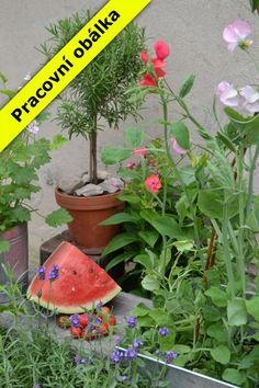 Anita Blahušová: Zahrádka v květináči cena od 269 Kč
