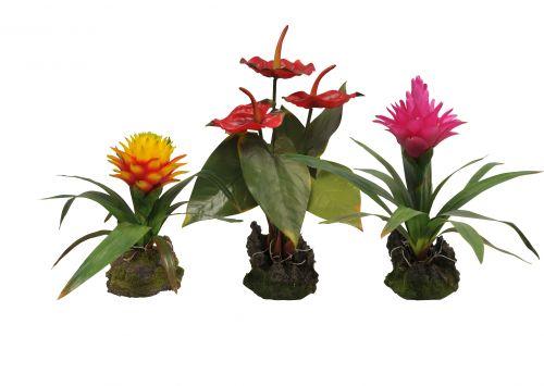 Lucky Reptile Jungle Plants Anthurium 25 cm