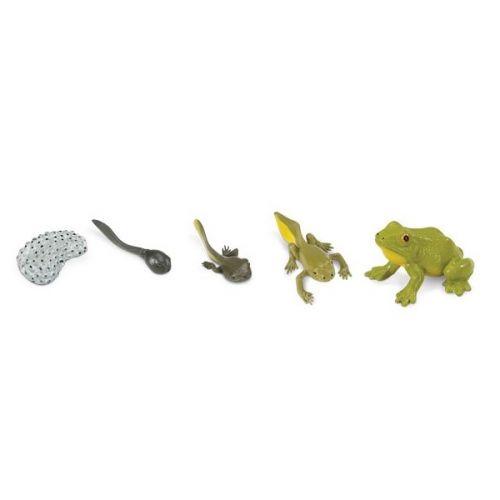 Safari Životní cyklus Žába 269129 cena od 295 Kč