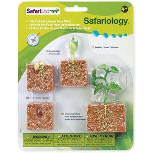 Safari Životní cyklus Zelená fazole 662416
