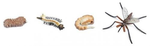 Safari Životní cyklus Komár SFS662616