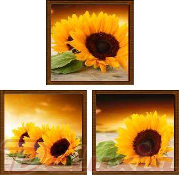 EVK slunečnice obraz 3 díly