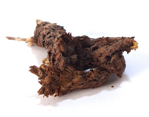 Salvia Paradise Černohlávek obecný klas 30 g cena od 101 Kč