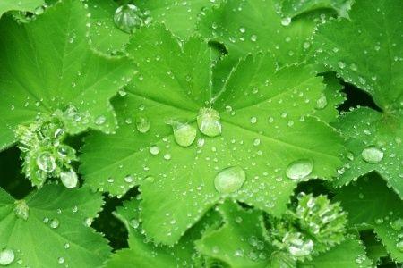 Salvia Paradise Kontryhel nať 50 g cena od 50 Kč