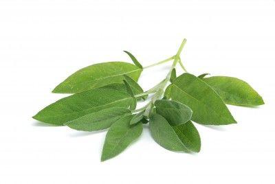 Salvia Paradise Šalvěj list 50 g cena od 40 Kč
