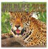 Footprints Level 1 - Audio CD cena od 592 Kč