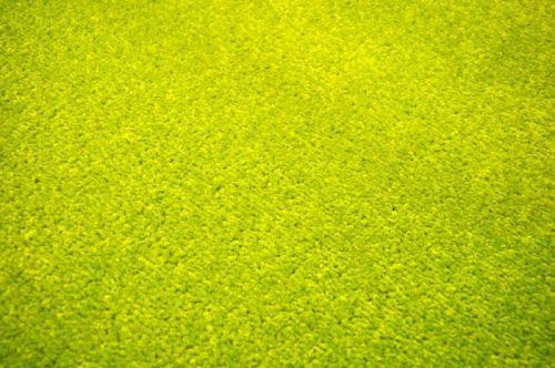 Vopi Eton zelený koberec