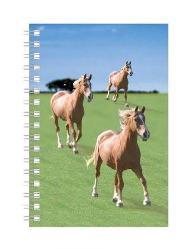 ABC Develop Deníček - Úžaska - Koně cena od 88 Kč
