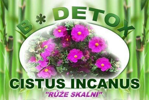 Bio-detox léčivý čaj Růže skalní CISTUS INCANUS 250 g