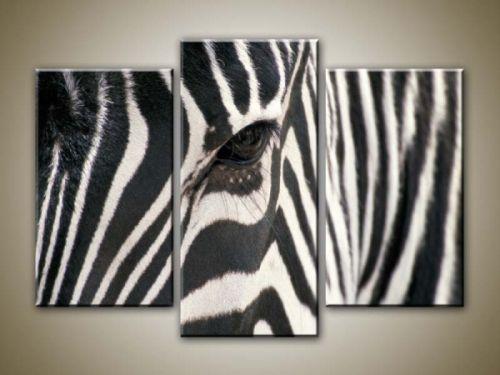 Xdecor Zebra oko
