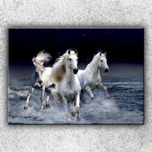 Xdecor Divocí koně 1