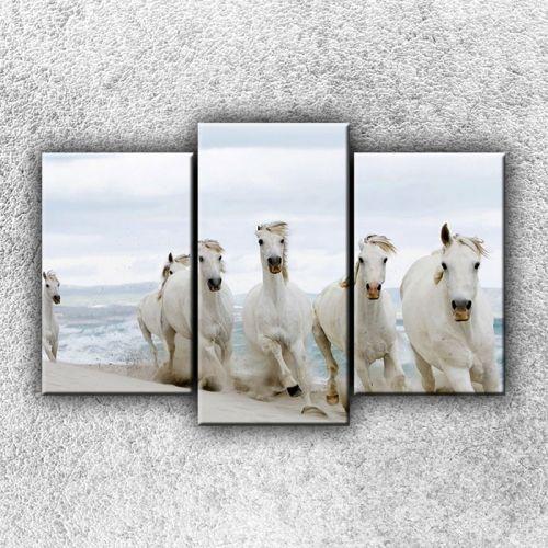 Xdecor Koně na pláži 2