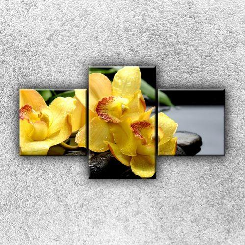 Xdecor Žluté orchideje na kamenech