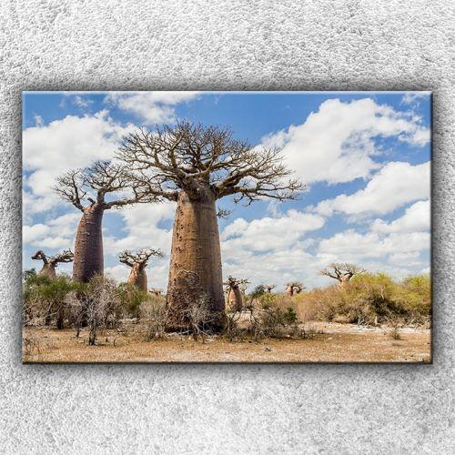 Xdecor Baobaby