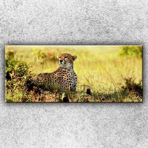 Xdecor Gepard v pozoru 1