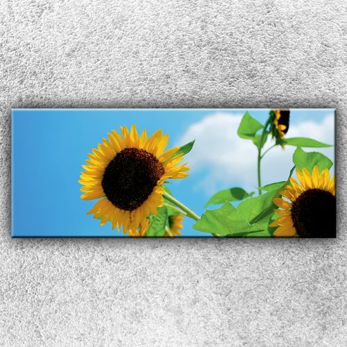 Xdecor Květy slunečnice