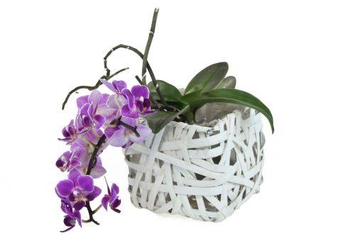 Twigo hranatý květináč z dýhy 16x16 cm