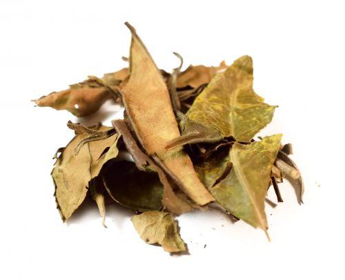 Salvia Paradise Shou mei special - Obočí dlouhého věku 15 g cena od 41 Kč
