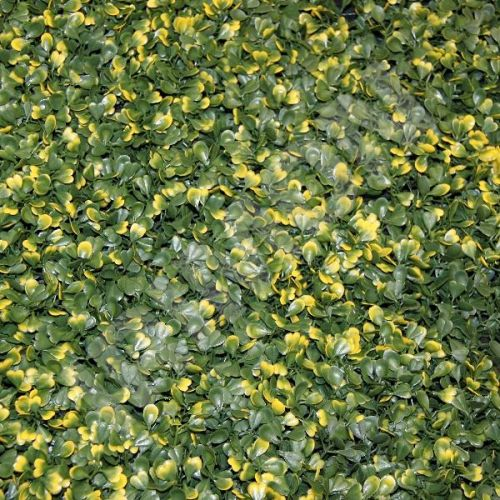 ARTLEAF BUXUS VG žlutě panašovaný buxus umělý živý plot 50 x 50 cm