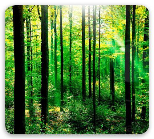 WENKO Ochranná skleněná deska FOREST