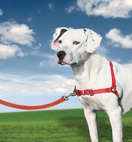 Easy Walk Postroj pro psy proti tahání EasyWalk Barva: červená, Velikost: XS